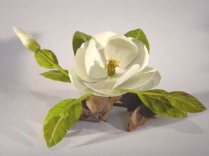 Magnolia & Ladybug by Charles Allen