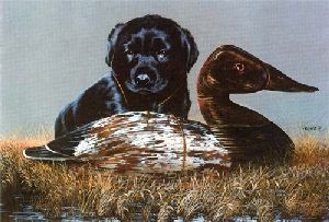 The Canvasback Kid by Phillip Crowe