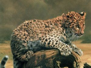 African Leopard Cub by Charles Frace