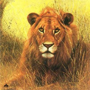 African Lion by Charles Frace