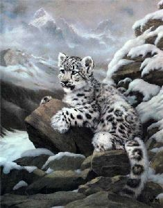 Himalayan Prince by Charles Frace