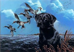 1989 Kentucky Duck Stamp Print by Phillip Crowe