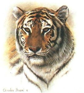 Bengal Tiger by Charles Frace